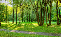 imagen medio ambiente COPAL